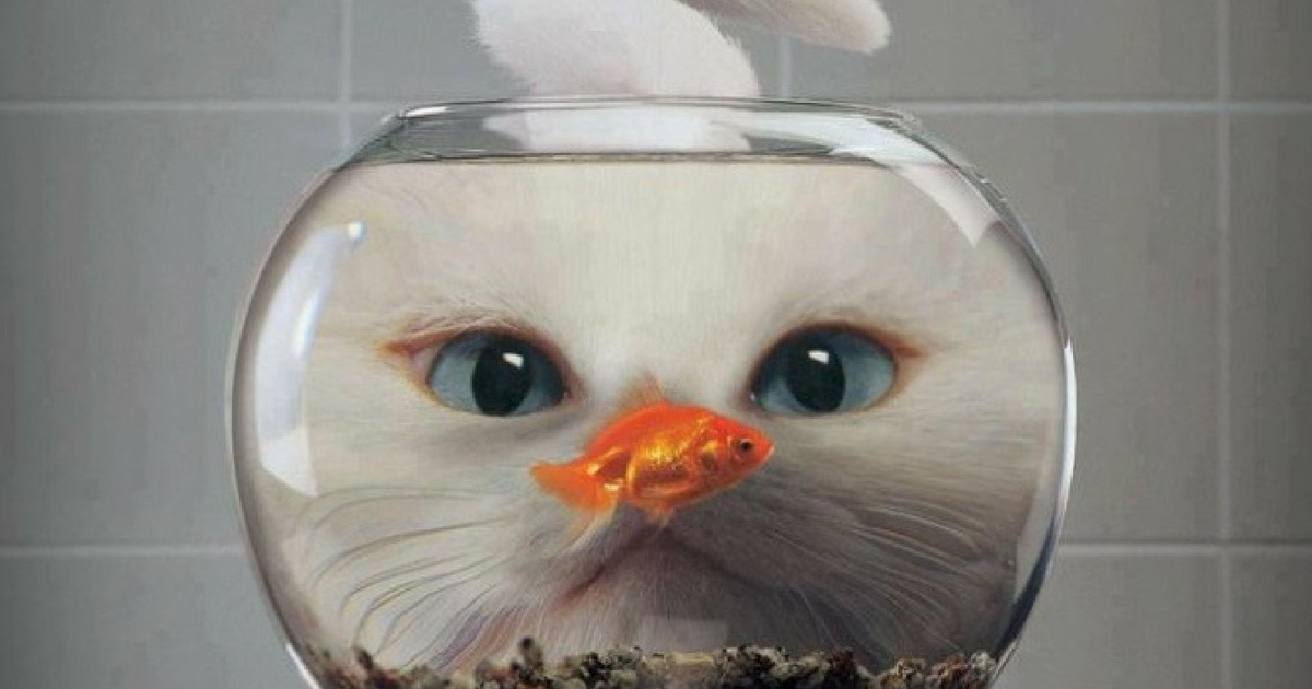 Cat watching fish 1200x630