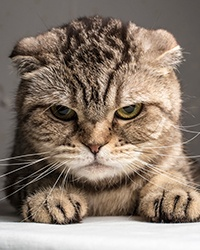 5 content marketing no-nos that piss people off